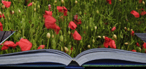 Flowers-From-Book-for.Home-page